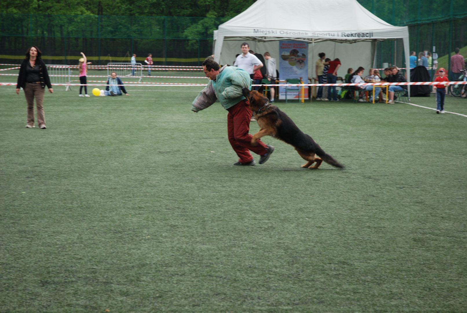 szkolenie psów legionowo