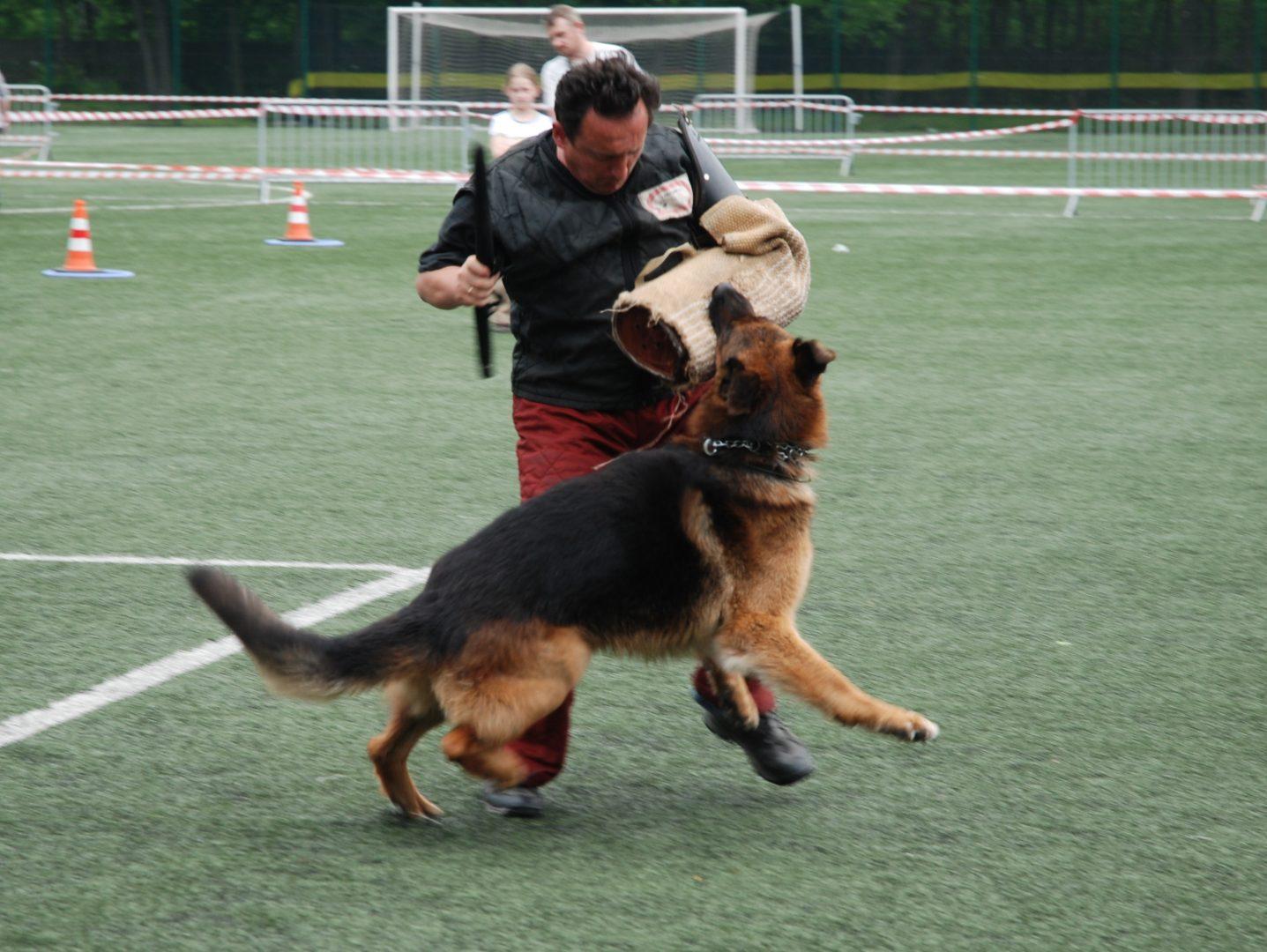 szkolenie psów legionowo,